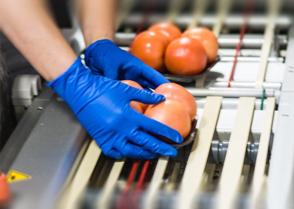 Premier Produce processing tomatoes image