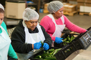 Processing zucchini at Premier Produce warehouse